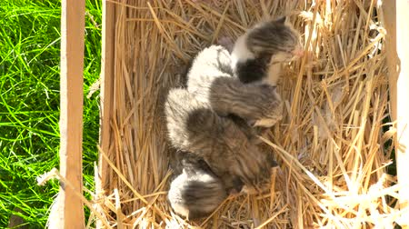 экономить : Newborn kittens lays in the wood box