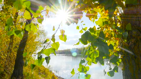 bridgework : View on the river with sun rays shining thru leaves.