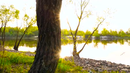 Sun rays through a tree. The camera is moving down. Against the background of the river