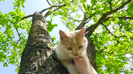 A ginger cat in the tree HD Стоковые видеозаписи