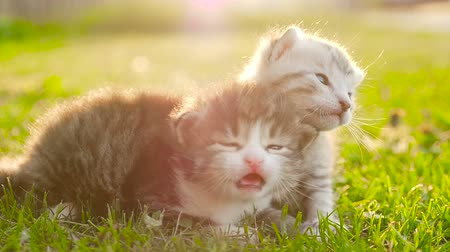 Two tiny nice kittens HD