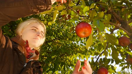 Beautiful girl picks an apple from a tree. Sunrise. Close-up. Slow-motion