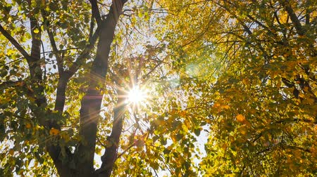 Bright sun rays. Golden autumn
