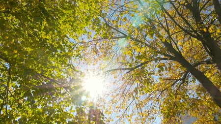 Golden autumn. The bright rays of the sun through the trees Стоковые видеозаписи