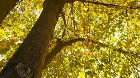 Autumn trees. Beautiful autumn. Yellow leaves