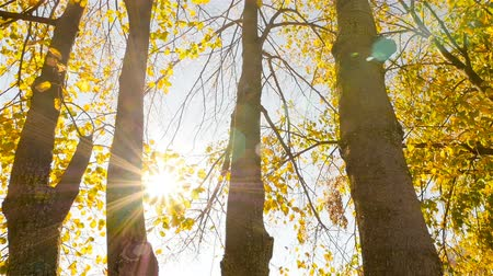 The sun shines through the trees. Camera in motion Стоковые видеозаписи