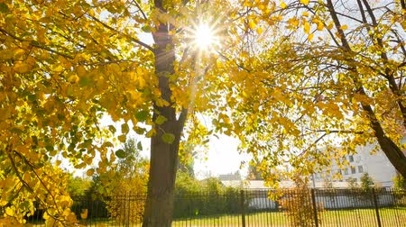 Beautiful autumn landscape. Sun lights. Camera in motion