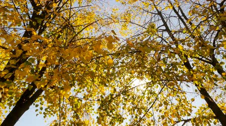 Autumn landscape. Beautiful yellow leaves. Bright sunshine. Camera in motion