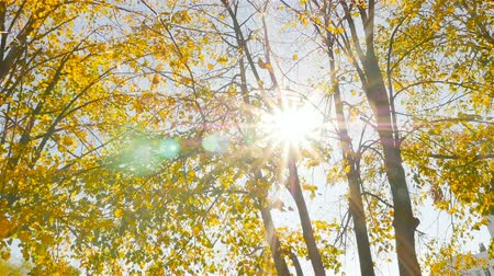 The sun shines through the leaves. Beautiful autumn. Camera in motion Стоковые видеозаписи