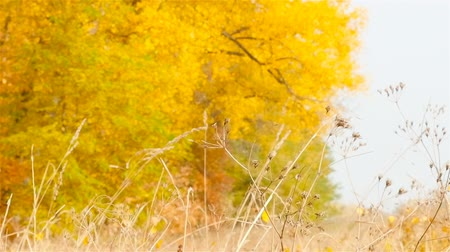 Autumn fallen leaves. Blurred Background. Slow motion Стоковые видеозаписи
