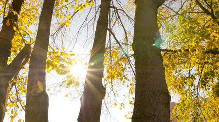 Golden autumn. The beautiful rays of the sun