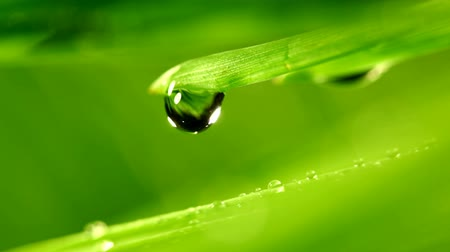 eko : waterdrop falling from grass leaf closeup