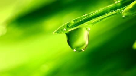 harmatcsepp : big water drop on grass Stock mozgókép