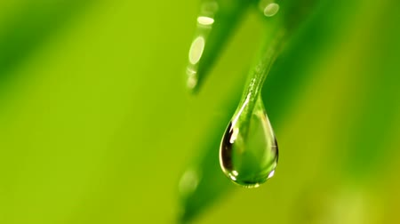 fotoszintézis : waterdrop falling from grass leaf closeup