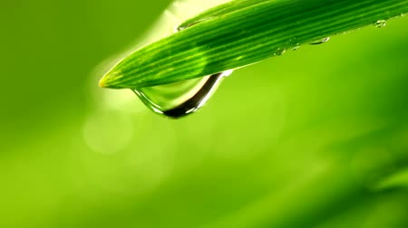 folhas : grass with water drops