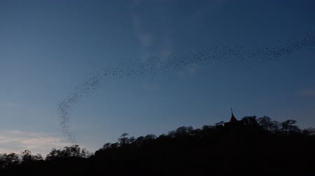 feiúra : Bats flying from a cave in the evening, thailand. HD Vídeos