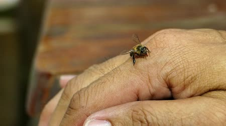 pain free : Bee fly down on a human hand. Slow motion. Stock Footage