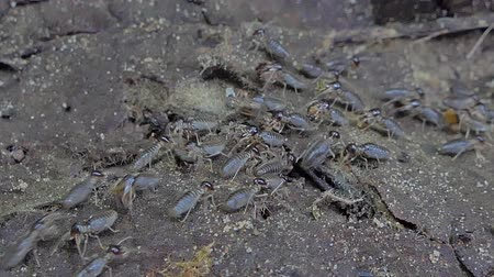 паук : Crowd of termites are finding food before the rain falls in tropical rainforest. Animal behavior during the rainy season Стоковые видеозаписи