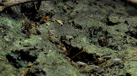 паук : Crowd of termites (Macrotermes) on ground in tropical rain forest.