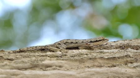 скрывать : Lizard on the tree in tropical rain forest.