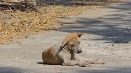 canino : Old stray dog sitting on the ground.