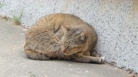 gato selvagem : Cat sleeping on grounds in sunny day at summer.