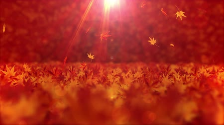 autumn : Autumn leaves fluttering Maple leaves background loops Stock Footage