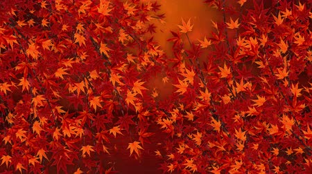 red maple : Autumn Leaves Falling on the Glittery Background, Maple Tree, Loop Animation, Stock Footage