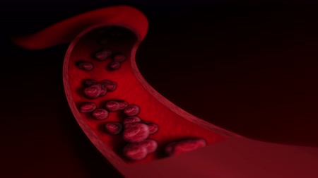 bloodcell : Human circulatory system. 3D loop animation of human blood vessel with blood cells. Medical health care symbol. Stock Footage