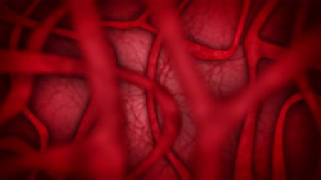 erythrocyte : Human Cardio System with Red Blood Vessels. Heart Beat Animation. Medical concept. Vein and Artery. Circulatory. Pulse internal body. Loop animation. Stock Footage