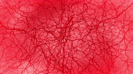 keringés : 3D loop animation of human blood vessel. Red Capillary. Eye Blood on Red Background. Anatomical background. Medical concept. Stock mozgókép
