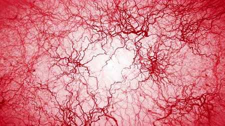 artère : 3D loop animation of human blood vessel. Red Capillary. Eye Blood on White Background. Anatomical background. Medical concept. Vidéos Libres De Droits