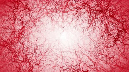 bulva oční : 3D loop animation of human blood vessel. Red Capillary. Eye Blood on White Background. Anatomical background. Medical concept. Dostupné videozáznamy