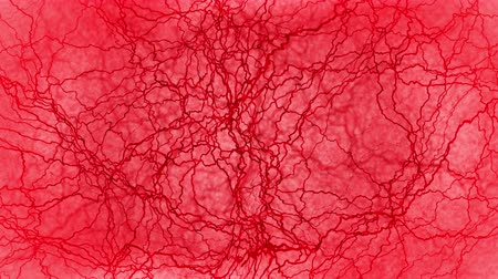 blood circulation : 3D loop animation of human blood vessel. Red Capillary. Eye Blood on Red Background. Anatomical background. Medical concept. Stock Footage