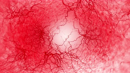 ismétlés : 3D loop animation of human blood vessel. Red Capillary. Eye Blood on White Background. Anatomical background. Medical concept. Stock mozgókép