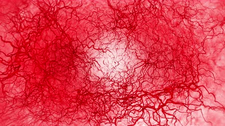 capillary : 3D loop animation of human blood vessel. Red Capillary. Eye Blood on White Background. Anatomical background. Medical concept. Stock Footage
