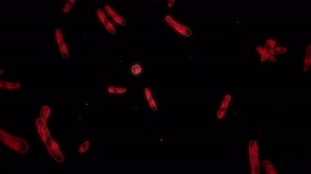 Virus cell in linear shape. Pathogenic viruses causing infection. Loop animation of human virus. Bacterial Viral Disease Disease. Outbreak. Стоковые видеозаписи