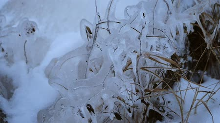 bulutluluk : Plants frozen in the ice on the shore of the bay Stok Video