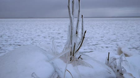 сосулька : Plants frozen in the ice on the shore of the bay Стоковые видеозаписи