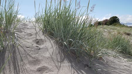 spuren im sand : Gras am Strand in Pärnu, Estland. Videos