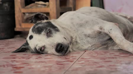 zbloudilý : Stray Dog sleeps in the Thailand Summer