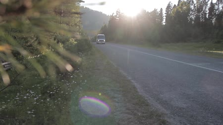 koç : Altai sunset bus goes down the road past the pine trees Stok Video