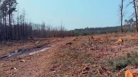 лесозаготовки : Panorama view of deforestated land