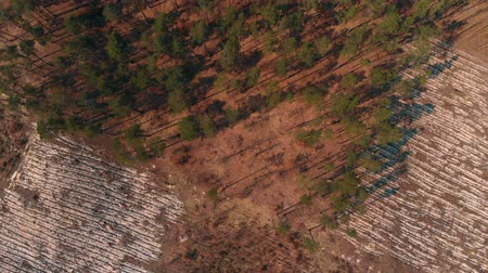 environmentalist : Top view of logged forest