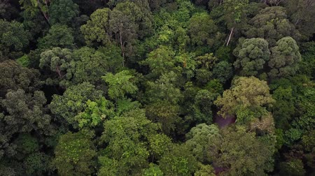 Борнео : aerial view of rainforest jungle in malaysia