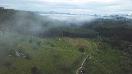 rubber plantation aerial footage in the morning with fogs