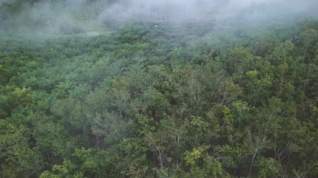 Aerial view of palm plantation in the morning with fogs Vídeos