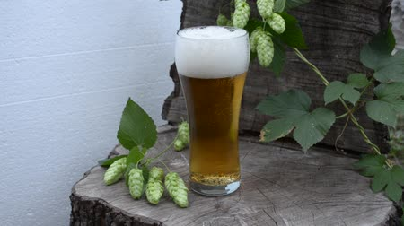 hops : Beer light and the plant hops