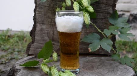 barril : Beer light and the plant hops