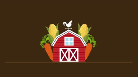 kakas : Farm illustration with corn and carrots, Video animation, HD 1080